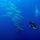 Blue Diving Ustica: alla scoperta dei fondali dell'isola