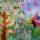 Consuntivo positivo per la Sagra dell'Asparago Verde di Altedo IGP 2016: grande partecipazione e entusiasmo nel nome della convivialità e dei valori